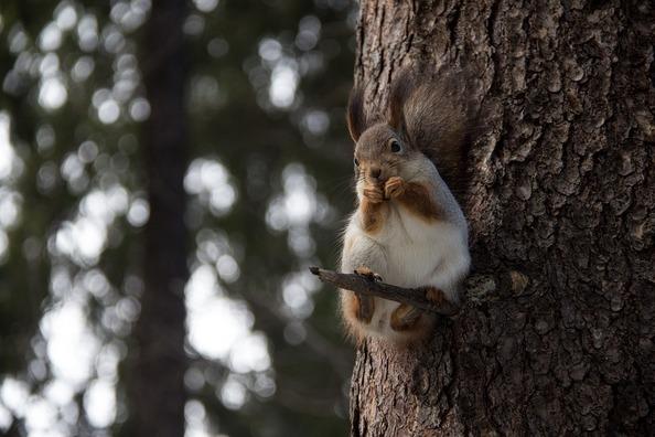 squirrel-2125021_960_720
