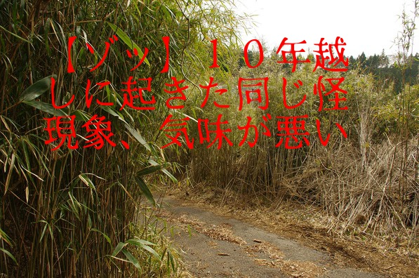 bamboo-forest-4772020_960_720
